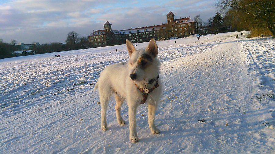 Billedet Balder på Bispebjerg bakke i sne.
