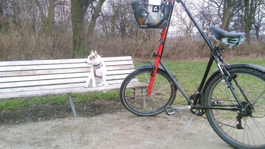 Billedet Balder på bænken.
