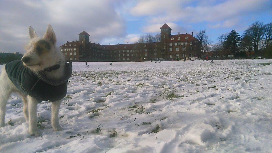 Billedet Bispebjerg Bakke i dag.