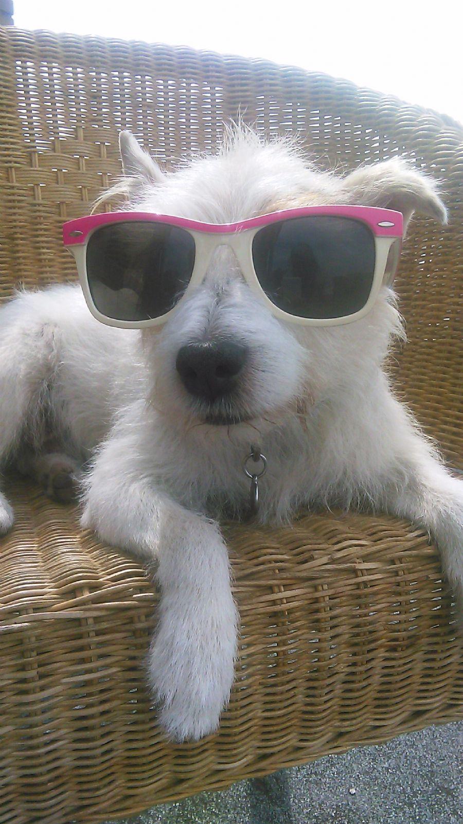 Billedet Nye solbriller til Balder.